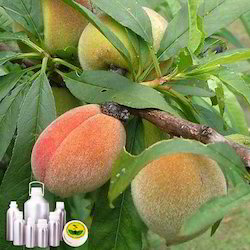 Peach Tree Leaf Absolute Oil