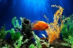 Aquarium Customized 3D Wallpaper