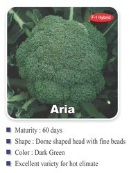 Aria Broccoli