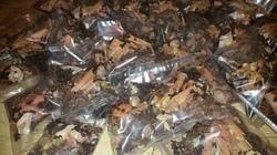 Spice ( Masala)