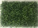ELASTIC Wall Grass