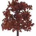 1000 Beads Rudraksha Beads Tree