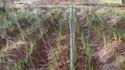 Plastic Spray Irrigation System