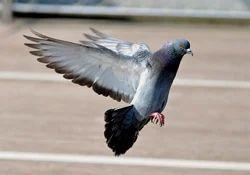 Birds Treatment Service