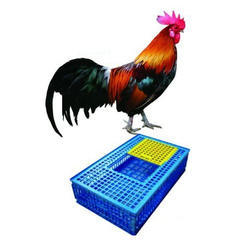 Bird Cages in Kolkata, West Bengal | Get Latest Price from Suppliers