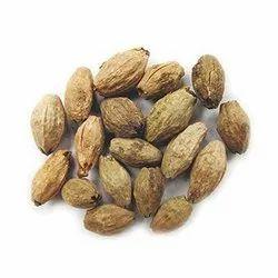 Meliadubia Seed