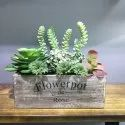 Artificial Succulent Arrangement