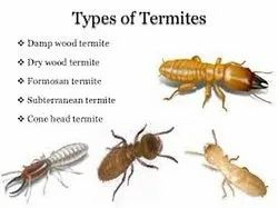 Anti Termite Soil Treatment Services