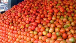 A Grade Red Tomatoes, Packaging Type: Polybag, Packaging Size: 5 Kg