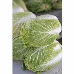 A Grade Green Chinese Cabbage