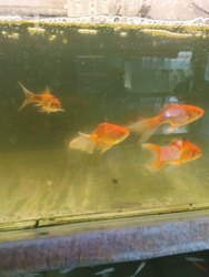 Live Fishes