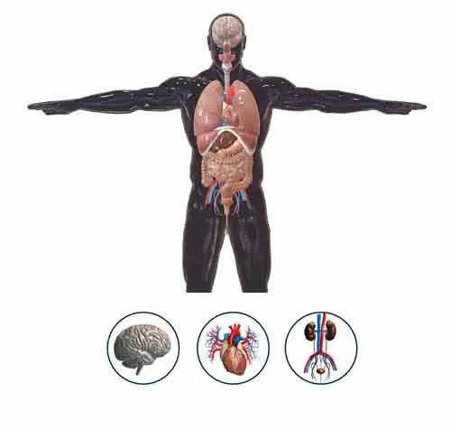 Human Anatomy 3D And 2D - View Specifications & Details of