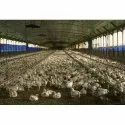 Poultry Farming Shed