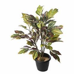 Croton Artificial Tree