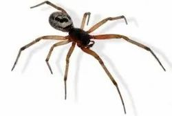 One Time Residential Spider Control Service