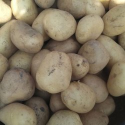 Lineo bags Potato Wafers