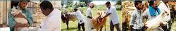 Animal Treatment Services