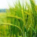 Premier Plant Growth Promoter