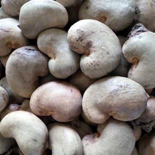 50 kg Raw Cashew Nuts, Packaging: Vacuum Bag