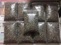 Dried Natural Wingless Moringa Seed