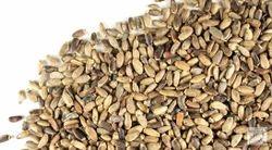 Milk Thistle Silybum Marianum / Silybum Marianum Seed