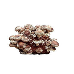 Natural Dried Shiitake Mushroom