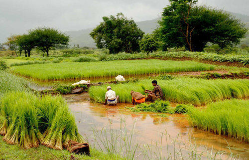 Agriculture Project, Agricultural Projects - Saumitra India
