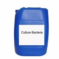 Aerobic Bacteria Culture
