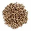 Brown Coriander Seed