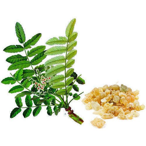 100% Boswellia Serrata Extract (Boswellic Acid) 40 -70%, Packaging Size: 25  Kg Hdpe Drum, Rs 950 /kg | ID: 5041965962
