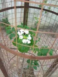 Showcase Flower