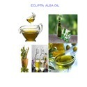 Eclipta Alba Oil