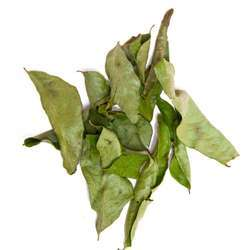 Curry Leaves Kadi Patta
