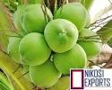Nikosi A Grade Tender Coconut, Packaging Size: 20 Kg, Coconut Size Available: Medium