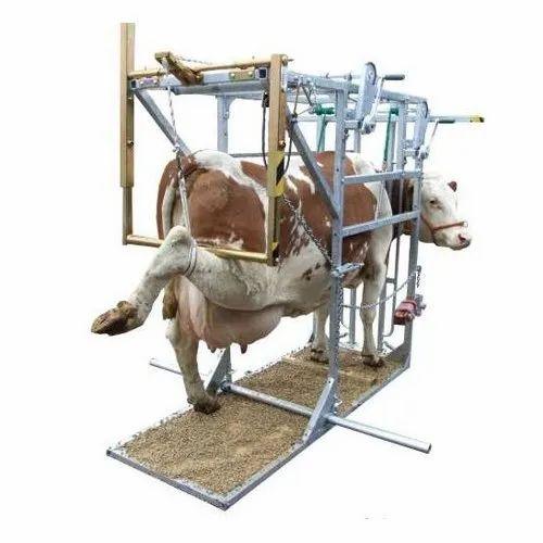 Cow Hoof Trimming Machine