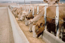Animal Feed Testing Services