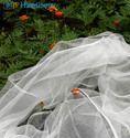 Sheer organza Silk Fabrics