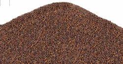 Shyama Tulsi Seed