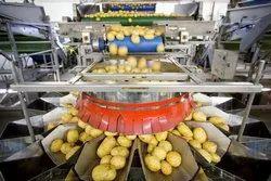 The Radhey Export Potato Grader, Capacity: 5 ton