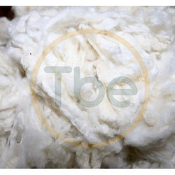 Natural Scoured Sheep Wool, For Carding