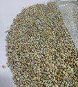 Green Millet ( Bajara )