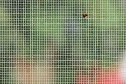 Mosquito Mesh