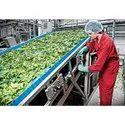 Food Grade Belt Conveyor