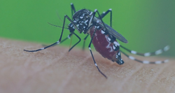 Fly And Mosquito Management Service