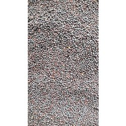 Natural Black Mustard Seed, Pack Size: 5-20 Kg, Pack Type: Pp Bag