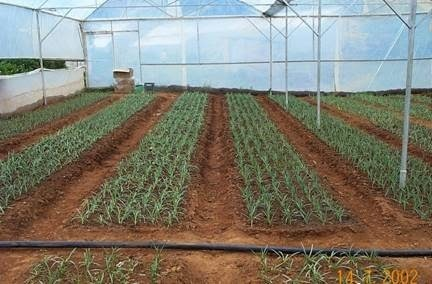 Greenhouse Organic Farming Services In Malad West Mumbai