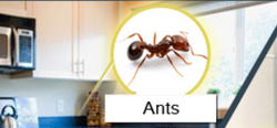 Ants Home Ant Pest Control Services