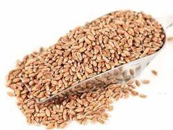 Brown Wheat Grains