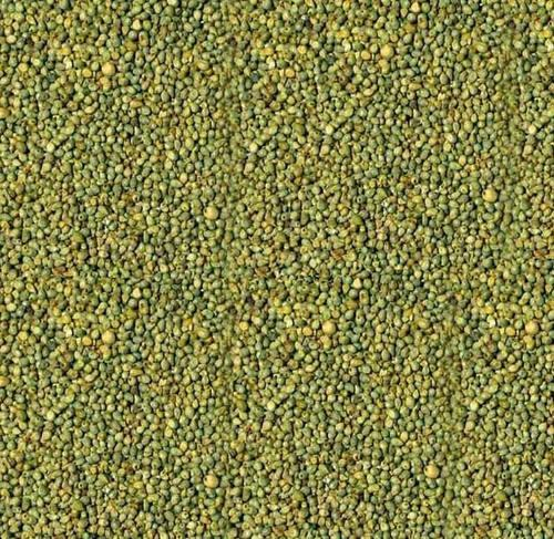 Indian Freshko Green Millet, High In Protein, Rs 15 /kelvin