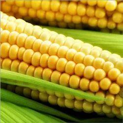 Switcorn Maize